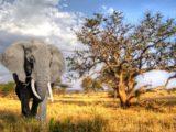 Safari in Tanzania: una guida pratica